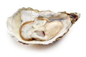 Imagem de ostra (Ellen White encomendou ostras)